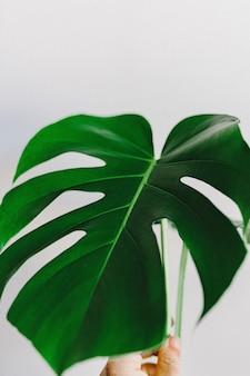 Folha verde sobre fundo branco