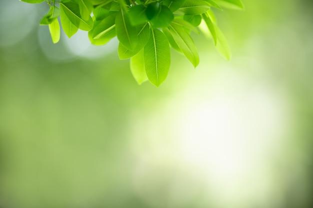 Folha verde sobre fundo verde borrado sob a luz do sol com bokeh.