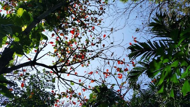 Folha verde tropical e céu azul. alto contraste