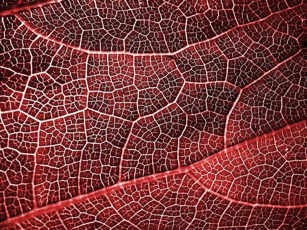 Folha vermelha