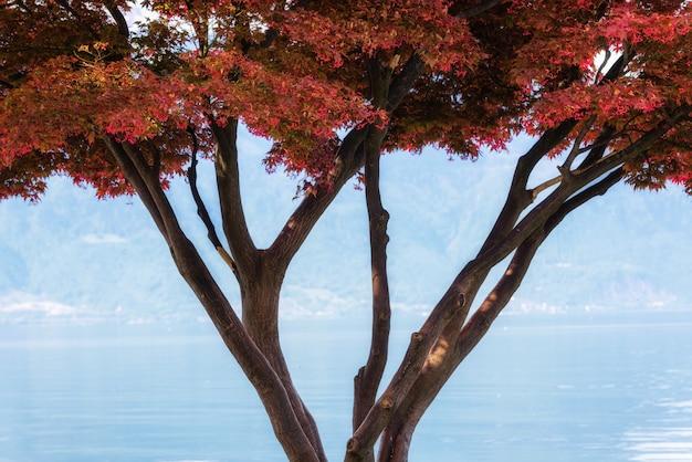 Folhagem bonita em outonal contra o lago azul, colorido de folhas de árvore com tranquilo cenário cênico