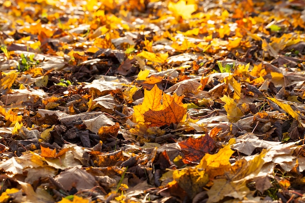Folhagem caída no chão de árvores decíduas