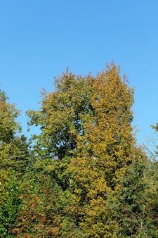 Folhagem colorida amarelada no outono, clima quente e ensolarado no meio do outono