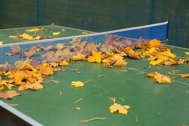 Folhagem colorida deixa em uma mesa de ténis de mesa
