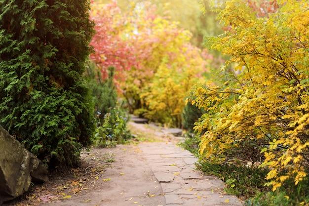 Folhagem colorida no parque outono. paisagem de outono