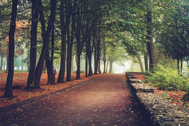 Folhagem colorida no parque outono