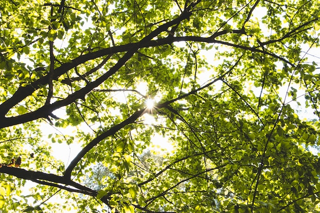 Folhagem de árvores em dia ensolarado