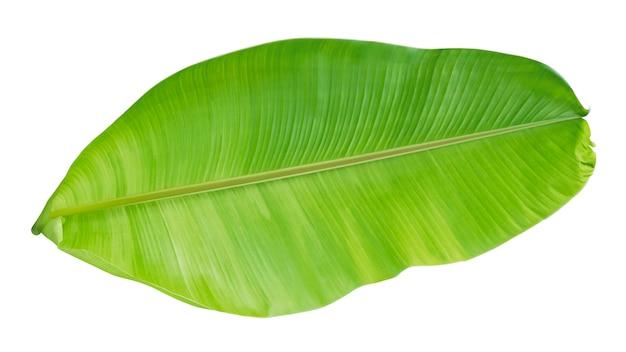 Folhagem de bananeira isolada no branco