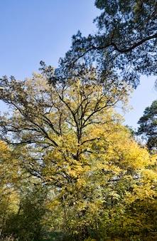 Folhagem de carvalho de outono