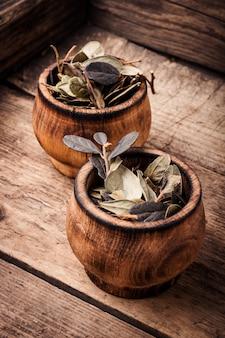 Folhagem de cura de acerola