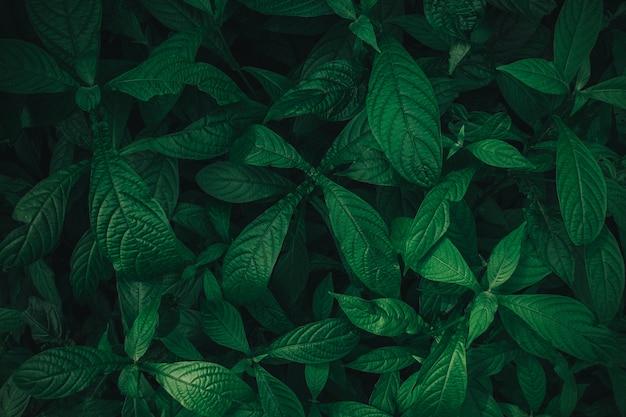 Folhagem, de, folha tropical, em, escuro, verde, textura