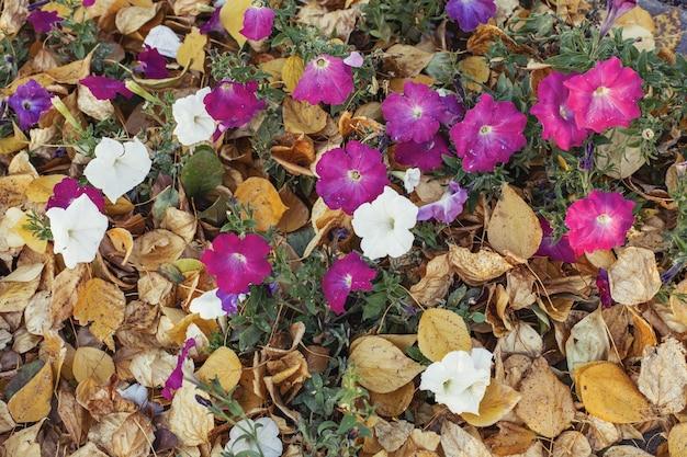 Folhagem de outono amarelo com flores roxas na parede do parque
