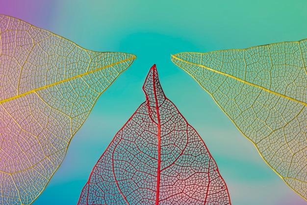 Folhagem de outono colorida abstrata