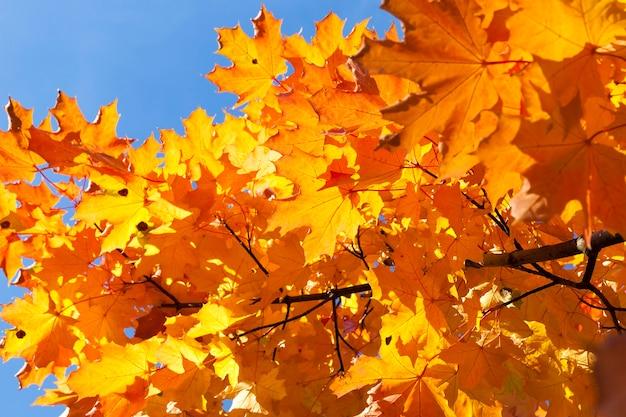 Folhagem durante a queda da folha