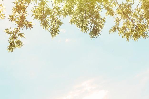 Folhagem e céu de copyspace. tema de verão. folhagem da árvore contra o céu. texto