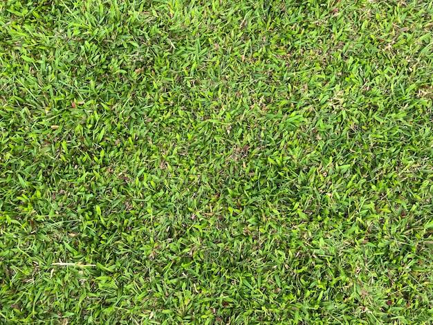 Folhagem na grama como textura de fundo