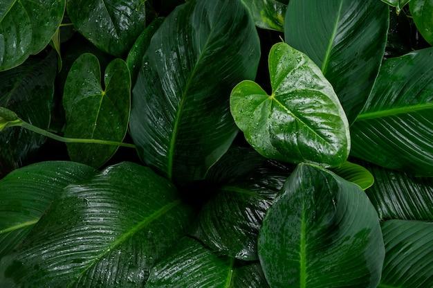 Folhagem no padrão verde escuro com gota de água de chuva