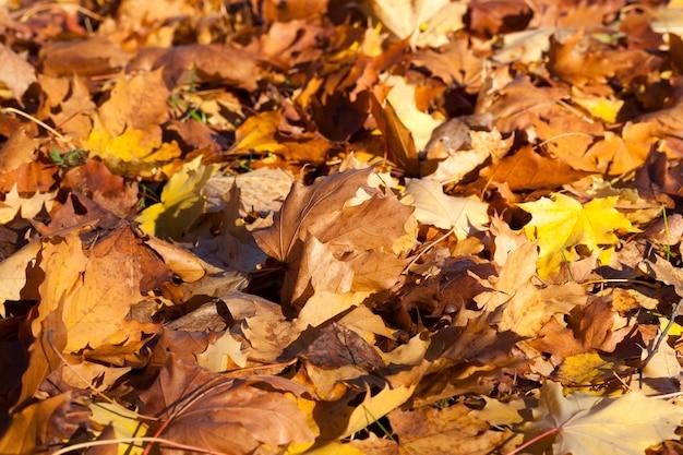 Folhagem seca caída no chão