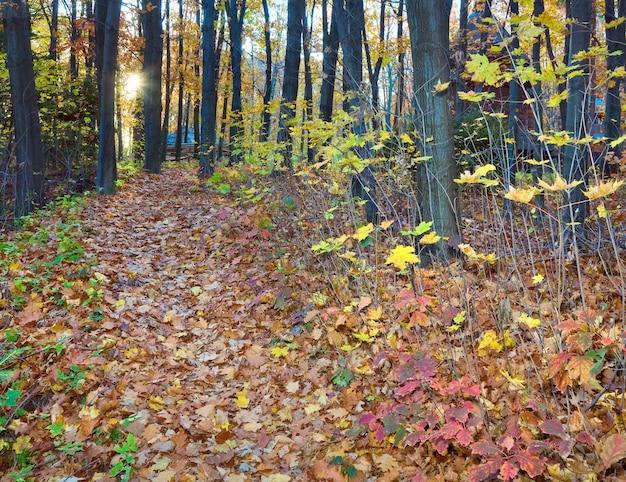 Folhagem seca, caminho e casa de madeira atrás das árvores no outono parque da cidade