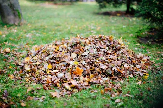 Folhagem seca coletada em montões durante a limpeza no outono