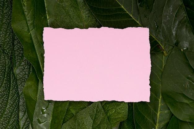 Folhagem tropical com cartão em branco rosa