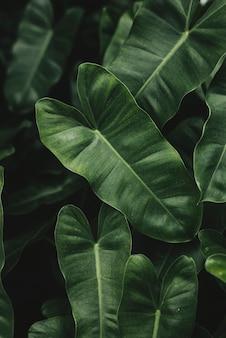 Folhagem tropical com textura de fundo