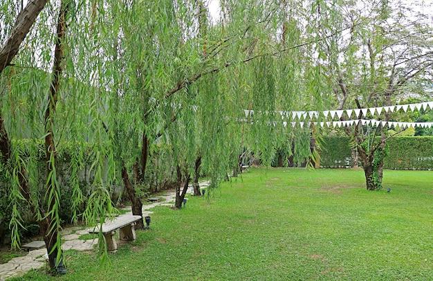 Folhagem verde com banco vazio em um parque público