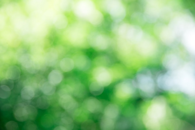 Folhagem verde com luzes de bokeh
