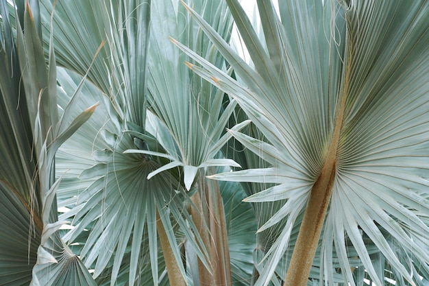 Folhagem verde tropical bonita