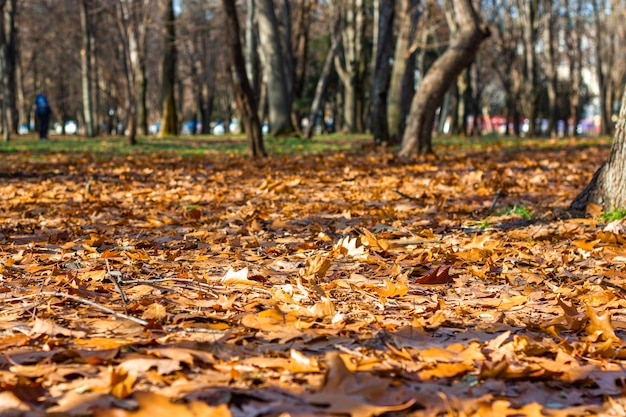 Folhas amarelas caem no chão do parque em um dia de outono