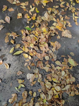 Folhas amarelas caídas na estrada