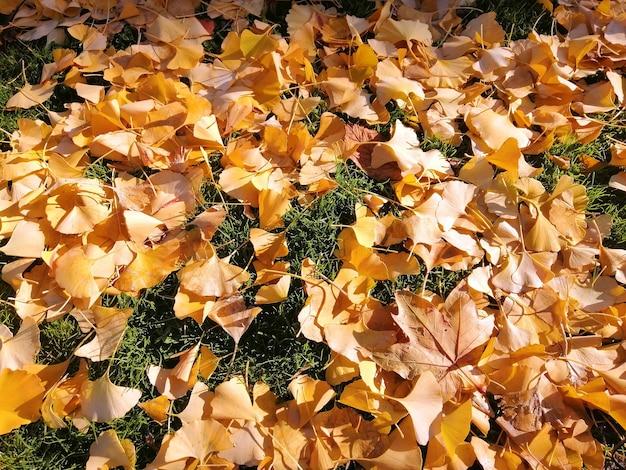 Folhas amarelas caídas na grama no outono em madri, espanha