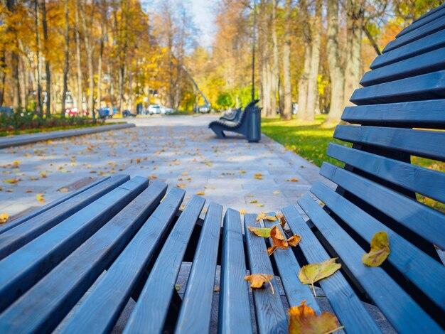 Folhas amarelas de outono em um banco de parque com foco seletivo
