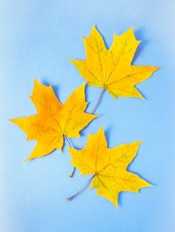 Folhas amarelas do outono na superfície azul