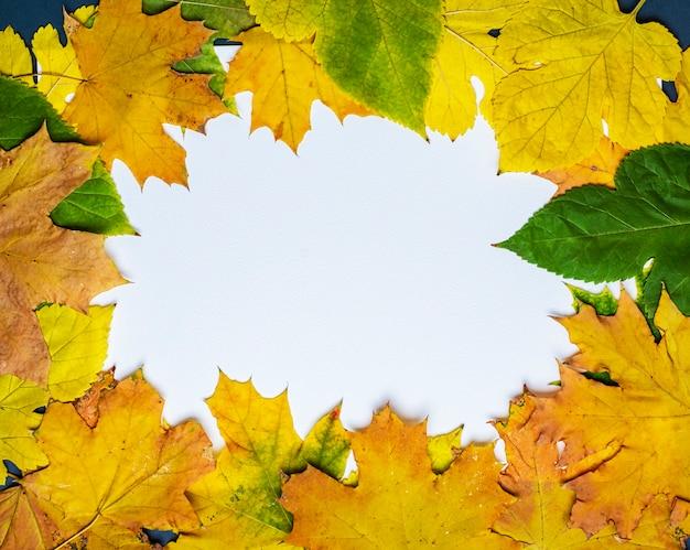 Folhas amarelas e verdes de maple e amoreira em um fundo branco
