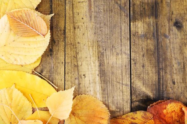 Folhas amarelas em madeira marrom