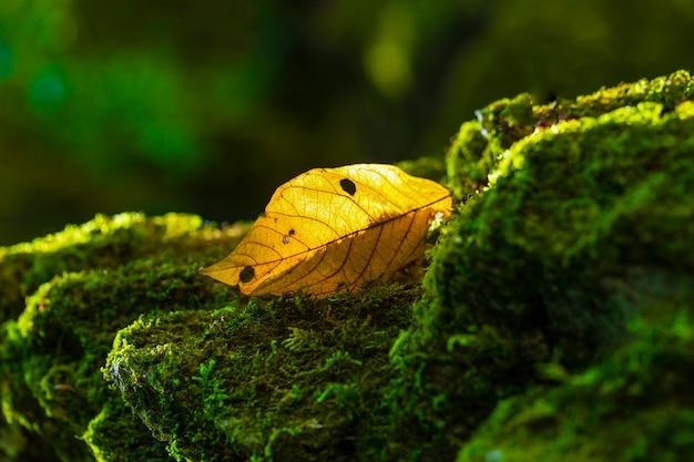 Folhas amarelas em uma rocha com musgo verde
