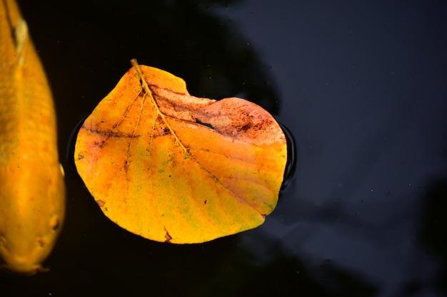 Folhas amarelas flutuando na superfície da água