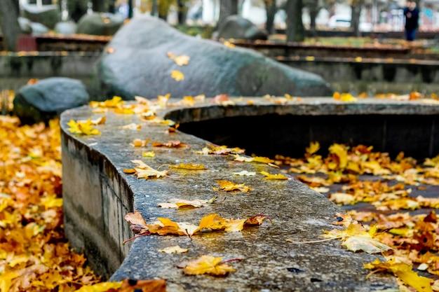 Folhas amarelas molhadas de outono no chão do parque da cidade durante a chuva