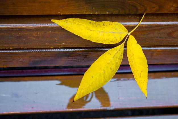 Folhas amarelas molhadas e folhas de freixo em um banco de madeira em um parque da cidade