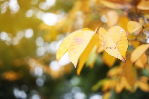 Folhas amarelas na luz solar