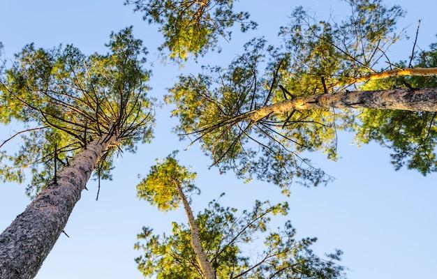 Folhas amarelas nas árvores