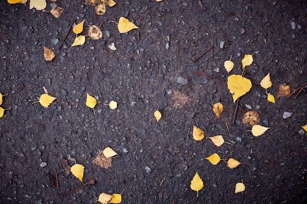 Folhas amarelas no asfalto e poças. fundo de pavimento azul escuro
