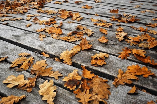 Folhas amarelas no chão de madeira