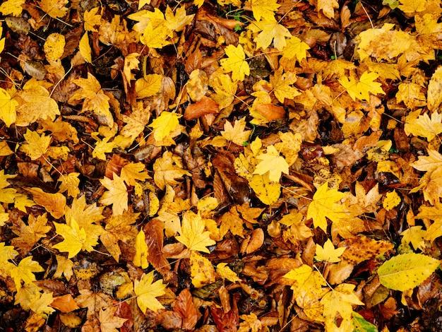 Folhas amarelas no chão outono floresta closeup natureza