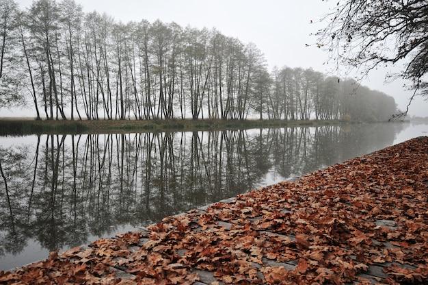 Folhas amarelas por um rio, árvores e nevoeiro