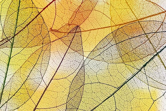 Folhas amarelas transparentes abstratas