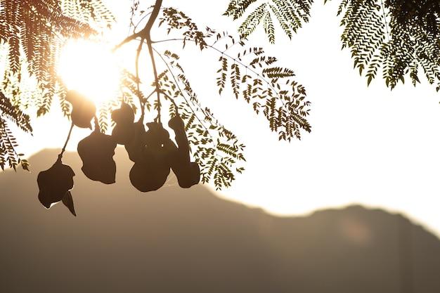 Folhas ao amanhecer ou pôr do sol em silhueta