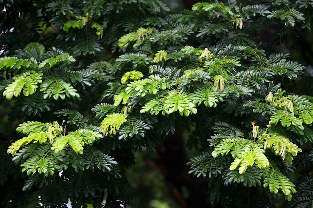 Folhas árvores da floresta tropical textura papel de parede