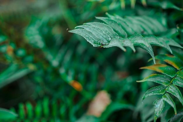 Folhas botânicas